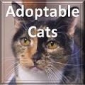 Adoptable_Cat_Button.jpg