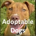 Adoptable_Dog_Button.jpg