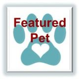 feature pet button