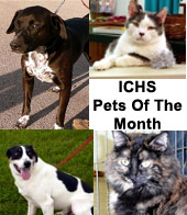 ICHS Pets of the Month